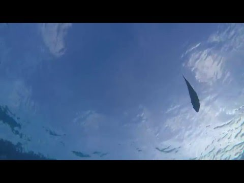 Relaxing 1.5 hour tropical underwater video with ocean sounds, White Bay, Jost Van Dyke, BVI