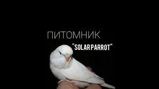 Питомник выставочных волнистых попугаев