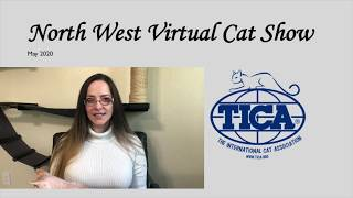 North West Virtual Cat Show - House Hold Pet Adult Final!!