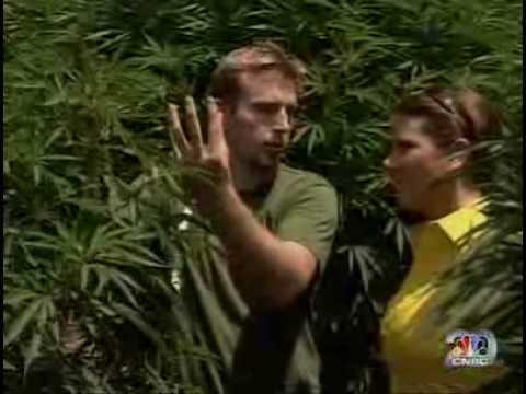 America's Industry Marijuana Crop