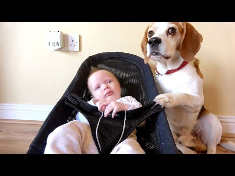 my-newborn-baby-loves-when-her-beagle-dog-takes-care-of-her