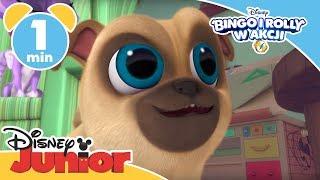 Bingo i Rolly w akcji | Maszyna do aportowania | Oglądaj w Disney Junior!