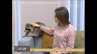 Енот дома: вся правда о содержании редкого животного в квартире