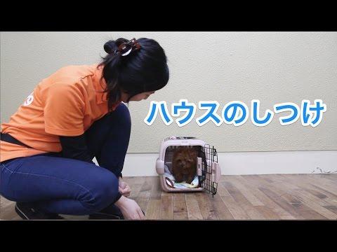 ハウスのしつけ〜犬のしつけは大阪のsmart-dog〜