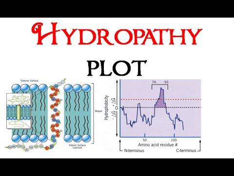 Hydropathy plot