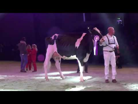 Swiss Expo 19: Championne intermédiaire