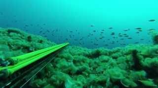 spearfishing dentex 4,9kg-5,2kg