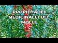 Molle Planta Medicinal; Propiedades Medicinales del Molle