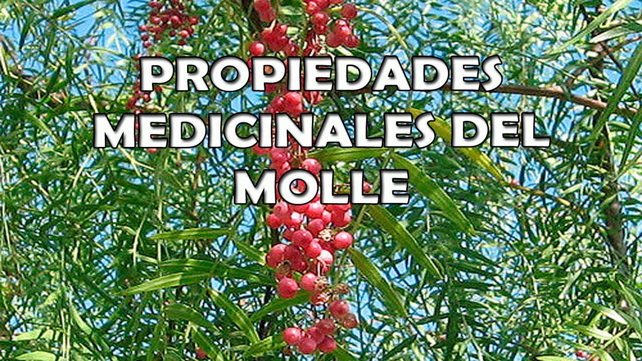 Molle planta medicinal propiedades medicinales del molle for Planta decorativa con propiedades medicinales