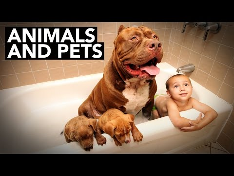 Best of BTV 2015: Animals and Pets