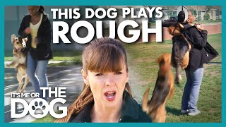 The Dog That Bounces Off the Walls (And His Owners) |  It's Me or The Dog