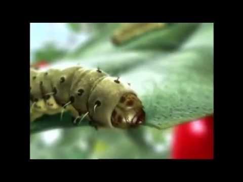 Проклейм применение инсектицида видео Сингента