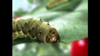 видео Регент: инструкция по применению инсектицида