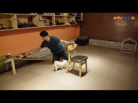 반려견 하우스 교육(의자 활용 교육방법) - dog training, clicker training