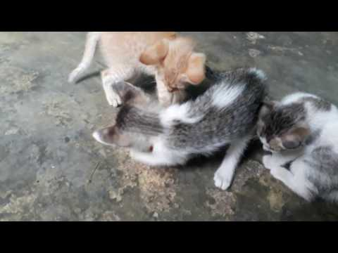 Cute kitten play with football Awesome 555