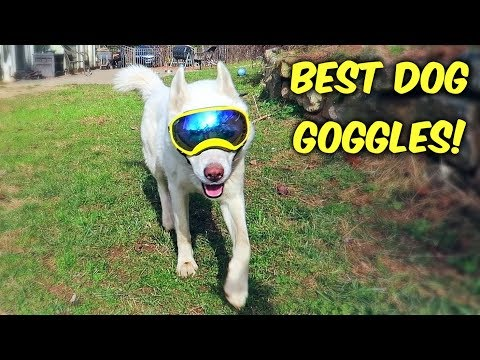 download Huskies Trying World's Best Dog Goggles for the First Time! (Funny Dogs)