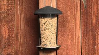 Perky-pet® Wall & Post Mount Wild Bird Feeder