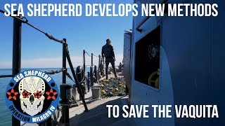 Sea Shepherd Improves Techniques to Save the Vaquita Porpoise.