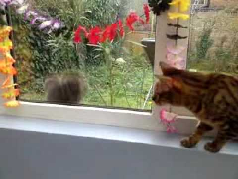 cat vs squirrel fail
