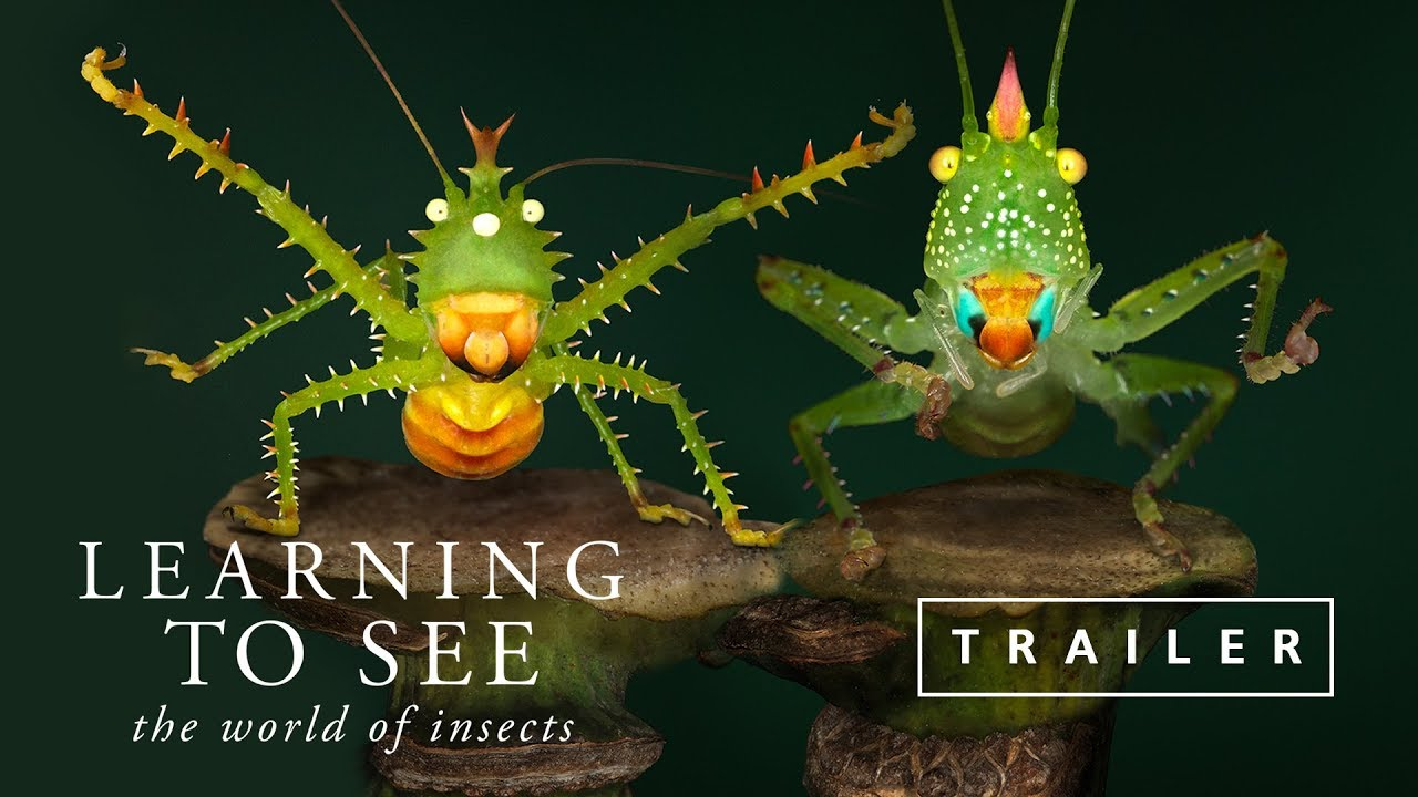 Learning To See - Official Trailer