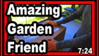 Amazing Garden Friend - Wisconsin Garden Video Blog 681