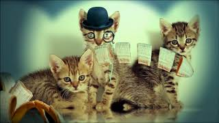 Gatos. (Poemas cortos para niños)