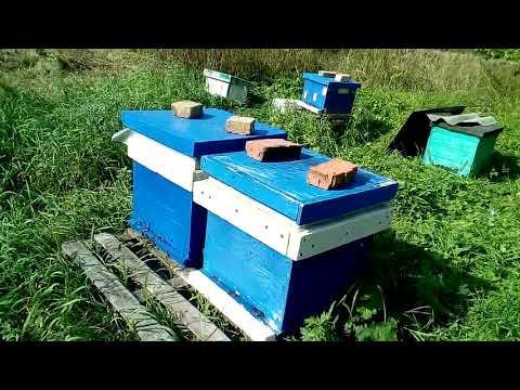 Как стать пчеловодом?!