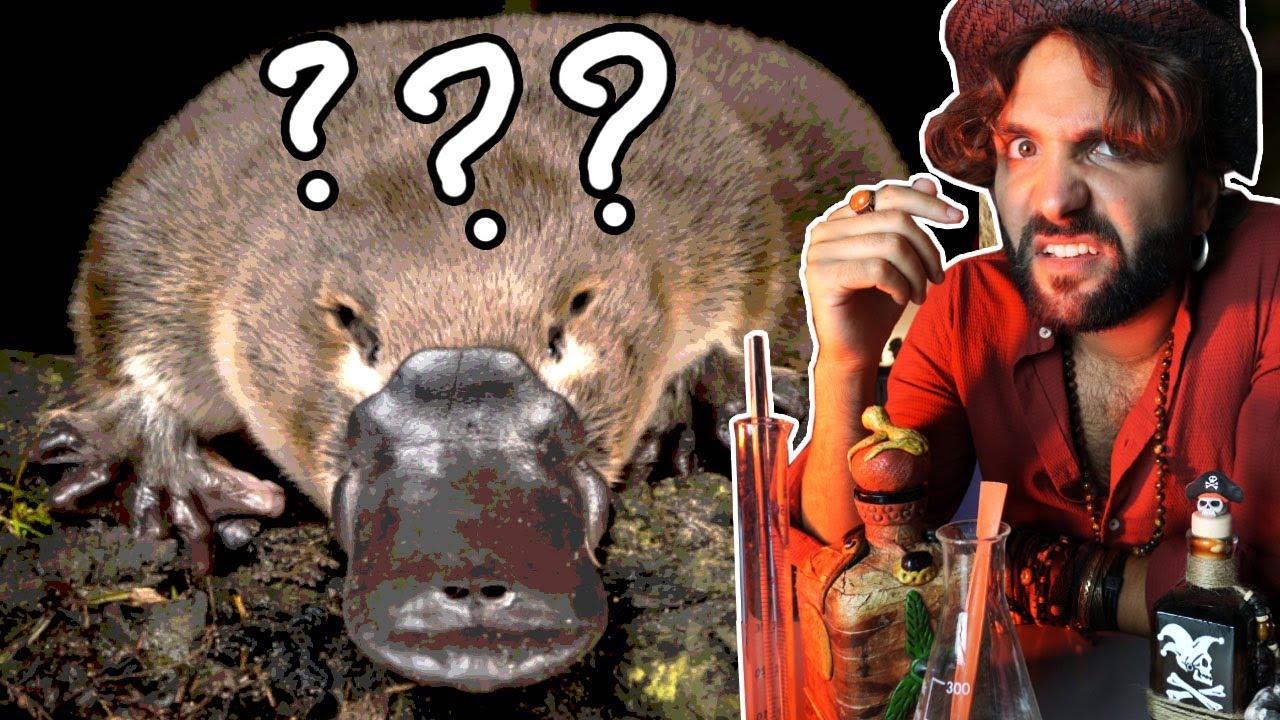 ORNITORINCO animale confuso - SCIENZA BRUTTA