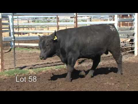 Burenda Angus 2013 Roma Sale Lot 58