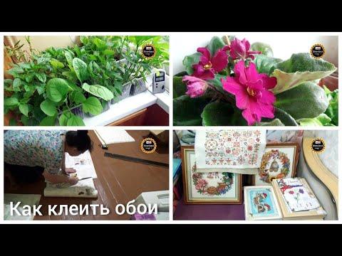VLOG: Обои /  Ремонт / Фиалки / Вышивка / Рассада