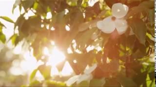 Mamburapoo Makhamile - Remix - Hyderabad