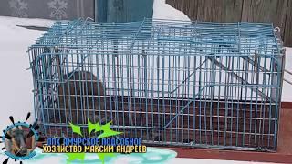 крысы 18 +
