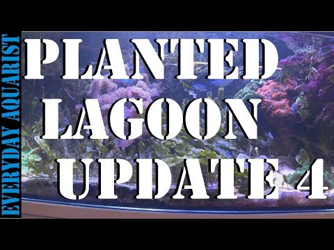 #4 Planted Marine Lagoon Aquarium  2 YEAR UPDATE