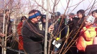 Обрезка интенсивного персикового сада(Провели семинар по обрезке интенсивного персикового сада., 2016-03-22T10:35:48.000Z)