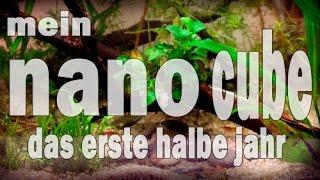 Mein NANO-CUBE Das erste halbe Jahr (Piscina #8)