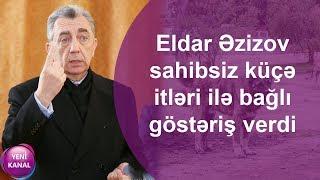 Eldar Əzizov sahibsiz küçə itləri ilə bağlı göstəriş verdi