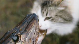 Щучий Vlog Vol. 3 Рыбалка в Финляндии. Довольные коты. Щучка около трёшки.