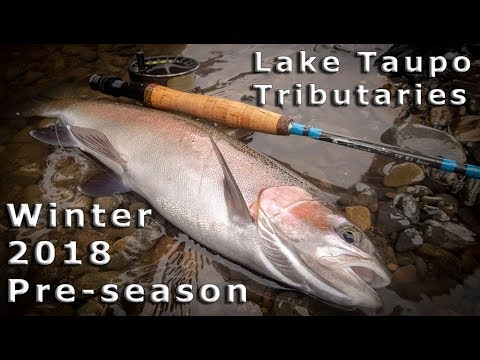 Wild Trout Of The Taupo Tributaries 2018 - Pre-season