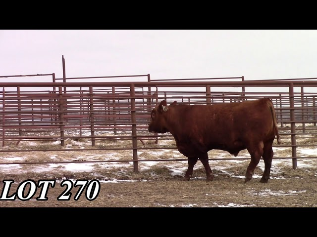 Mead Angus Farms Lot 270
