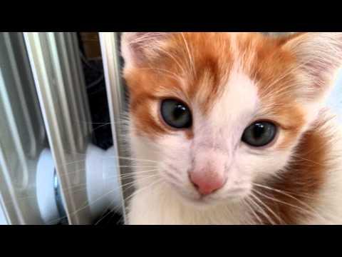 Aww Cute Kitten With Blue Eyes In 4K 2160p UHD Ultra HD Video