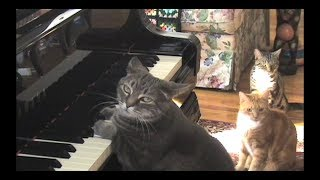 Repeat youtube video CATcerto. ORIGINAL PERFORMANCE. Mindaugas Piecaitis, Nora The Piano Cat