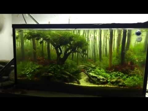 Aquascaping Forest Youtube