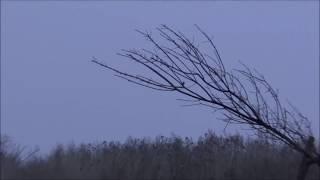 04-05.11.13 Ловля певчих птиц тайником, Днепропетровская обл:) Bird hunting trap