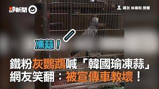 鐵粉灰鸚鵡喊「韓國瑜凍蒜」 網友笑翻:被宣傳車教壞!