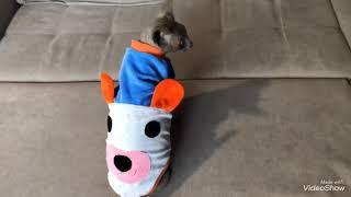 Одежда для сфинксов купить Харьков, одежда для кота купить, sphynx cat wear, cat clothes