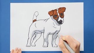 How to draw and color a Russell Terrier - how to make dogs series