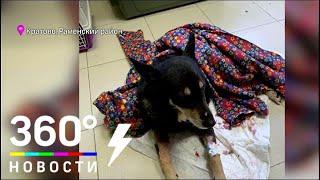 В поселке Кратово Раменского района мужчину укусила бешеная собака
