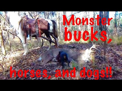 MONSTER WHITETAIL Bucks, SADDLE HORSES, & TRACKING' DOGS 😰😰😰