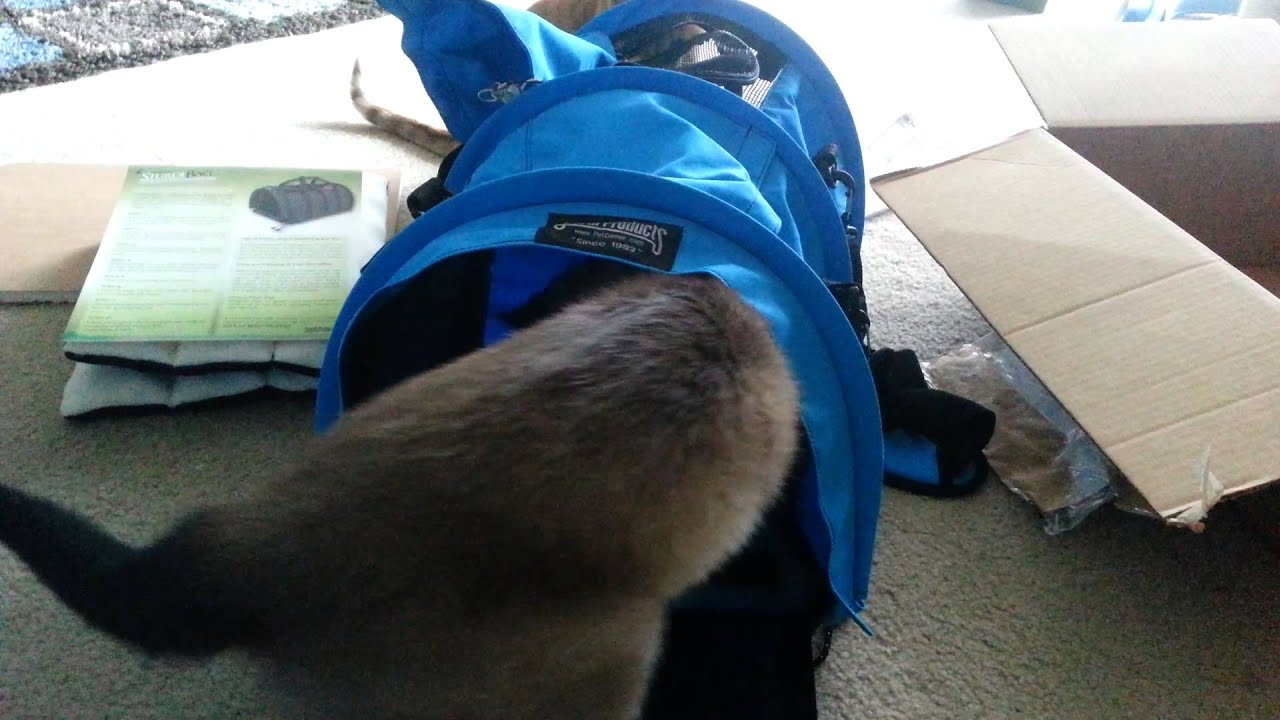 Sturdibag Divided Carrier For My Two Cats Youtube