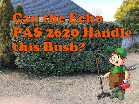 Trimming a very large bush with the Echo PAS 2620